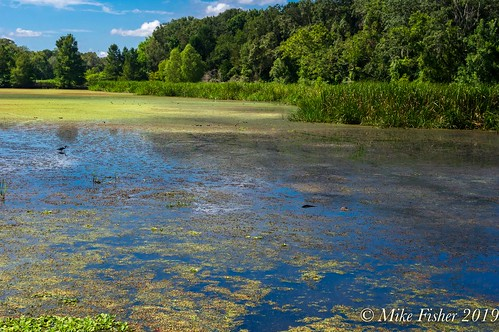 Pond Life Idyll