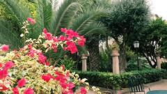 20190908_132607 (uweschami) Tags: spanien espania mallorca palma altstadt arabischesbad palmen hamam mauren banysarabs garten gewölbe