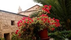 20190908_132730 (uweschami) Tags: spanien espania mallorca palma altstadt arabischesbad palmen hamam mauren banysarabs garten gewölbe