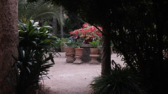 20190908_133141 (uweschami) Tags: spanien espania mallorca palma altstadt arabischesbad palmen hamam mauren banysarabs garten gewölbe