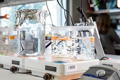 UCSD-JacobsSchool-20160304-Christman_Karen-7876-ok-2-8MP (Jacobs School of Engineering) Tags: christmankaren sanfordconsortiumforregenerativemedicine ungerleiderjessica bioengineering hydrogel heartdisease heartattack departmentofbioengineering