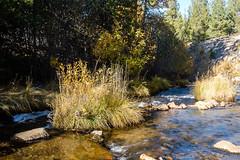 Sunlit Stream (San Francisco Gal) Tags: lnvp lassennationalvolcanicpark autumn grass stream foliage water california ngc npc