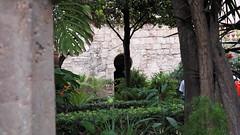 20190908_132420 (uweschami) Tags: spanien espania mallorca palma altstadt arabischesbad palmen hamam mauren banysarabs garten gewölbe