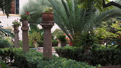 20190908_132351 (uweschami) Tags: spanien espania mallorca palma altstadt arabischesbad palmen hamam mauren banysarabs garten gewölbe