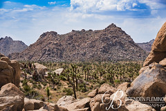 Joshua Tree National Park 5 (MrDiscoDucks) Tags: brenden fleming brendenfleming nikon d810 nikond810 2018 hiking hike adventure explore mrdiscoducks outdoors outdoor outside travel traveling landscape landscapes photo photography photographer nature paths sun sunny camping camp trail trails summer may 2019 joshua tree national park california joshuatree nationalpark