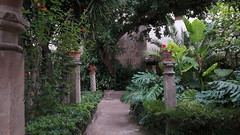 20190908_132452 (uweschami) Tags: spanien espania mallorca palma altstadt arabischesbad palmen hamam mauren banysarabs garten gewölbe