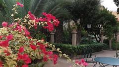 20190908_132710 (uweschami) Tags: spanien espania mallorca palma altstadt arabischesbad palmen hamam mauren banysarabs garten gewölbe
