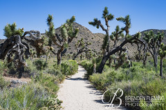 Joshua Tree National Park 7 (MrDiscoDucks) Tags: brenden fleming brendenfleming nikon d810 nikond810 2018 hiking hike adventure explore mrdiscoducks outdoors outdoor outside travel traveling landscape landscapes photo photography photographer nature paths sun sunny camping camp trail trails summer may 2019 california joshua tree national park joshuatree