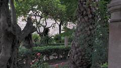 20190908_132440 (uweschami) Tags: spanien espania mallorca palma altstadt arabischesbad palmen hamam mauren banysarabs garten gewölbe
