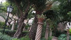 20190908_132533 (uweschami) Tags: spanien espania mallorca palma altstadt arabischesbad palmen hamam mauren banysarabs garten gewölbe
