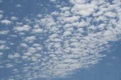 """Bon Dimarts de núvols, de cabretes. """"Quan al cel hi ha cabretes, al terra hi ha pastetes."""" (heraldeixample) Tags: altocúmulus altocumulus heraldeixample núvols clouds nubes skyer nuages cymylau nuvole 雲 nuvens nori 云 облака wolken nwn martesdenubes cabretes ngc"""