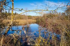 El lago descuidado (SantiMB.Photos) Tags: 2blog 2tumblr 2ig invierno winter tordera maresme lago lake canraba geo:lat=4170830731 geo:lon=272234392 geotagged cataluna españa