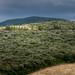 Landschaft bei Bibbona