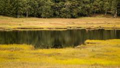 Tourbière de Machais, Vosges. (Gisou68Fr) Tags: tourbière bog reflets reflections jaune yellow arbres trees eau water vosges tourbièredemachais