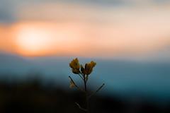 Atardecer (belenaguilerasegura) Tags: andalucia españa campo atardecer sunset granada