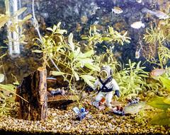 JobLot_00000010051.jpg (The Digital Shoebox) Tags: negatives fun epson700 70s scan fish funny plasticfigures aquarium foundfilm ebay film 4x5
