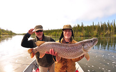 Fatso Pike (Fish as art) Tags: northwestterritories fisheries fishing pesce angeln pikefishing northernpike esoxlucius canada outdoorphotography adventure boating travel vacation summer northern northernfishes canadiannorth water river fatpike boatfishing