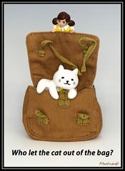 Who let the cat out of the bag? (photozaki) Tags: britishidiom idiom wholetthecatoutofthebag cat bag closeup macro olympus