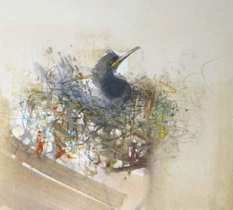 Claire Harkess 'Nesting Shag, Isle of May'