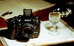 f4s (bluebird87) Tags: f4s f5 nikon dx0 c41 epson v800 lightroom kodak portra 160 jobo camera