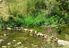 Pasamos el río ? (kirru11) Tags: ríocidacos vegetación agua piedras floressilvestres hierba campo quel larioja españa kirru11 anaechebarria canonpowershot