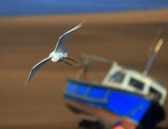 Little Egret, Wirral coast  - Meols (Cal Killikelly) Tags: wirralbeautyspot wirralcountrypark leasowe meaols boats littleegret wildlife wirralpeninsula coast seaside sand sea blue white brown