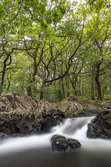 Dolmelynllyn (chrisellis211) Tags: landscape landscapephotography wideangle canon 80d wales northwales snowdonia hiking hikingadventures water waterfall rock forest coed dolmelynllyn dolgellau nt nationaltrust
