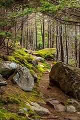 Magical Trail (Karen_Chappell) Tags: eastcoast eastcoasttrail trail path woods forest trees rocks moss green brown nature outdoors landscape scenery scenic avalonpeninsula atlanticcanada canada canonef24105mmf4lisusm