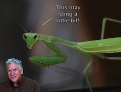 Mantis Sting (FolsomNatural) Tags: alien manits prayingmantis sting humor photoediting