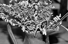 IMG_2061 (thomas_sidney@live.co.uk) Tags: lynsted kent uk england europe earth milky way ludgate pug flowers family home black white mono canon 50mm