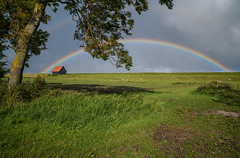 Rainbow over the dike (Julysha) Tags: rainbow rain dike 2019 thenetherlands noordholland september autumn d850 sigma241054art acr tree sheep field green grass weather barn kreileroord medemblik