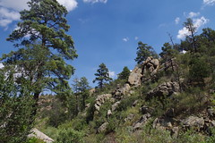 Along Mint Wash, Granite Mountain Recreation Area (EllenJo) Tags: prescott prescottarizona yavapaicounty arizona september9 2019 prescottaz az