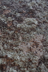 Lichen on granite (EllenJo) Tags: prescott prescottarizona yavapaicounty arizona september9 2019 prescottaz az