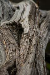 Bark (melissa.notley) Tags: tree bark old dry dead brown texture wichitamountainswildliferefuge oklahoma