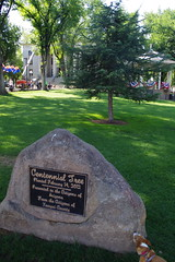 Centennial Tree, Courthouse Plaza (EllenJo) Tags: prescott prescottarizona yavapaicounty arizona september9 2019 prescottaz az