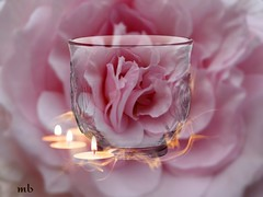 Romance (maria.bove07) Tags: rose fiori