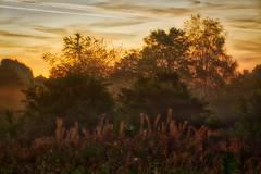 Morgendunst / morning mist 3 (Chridage) Tags: morningmist morgendunst sonnenaufgang sunrise morgengrauen morgenrot dunst bäume frühnebel