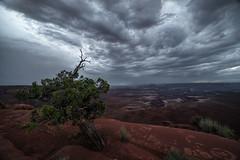 Storm Dweller (Maddog Murph) Tags: canyonlands national park utah storm monsoon clouds tree juniper canyon southwest