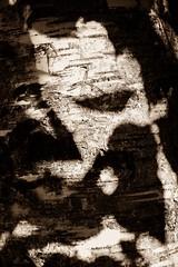 Brushes(Explored 11/09/2019) (Listenwave Photography) Tags: urarum set religare think sunny life alive dark leaf leafs portrait extra flickrelite ngc inexplore view satori zen open transcendental mind inside nothing style street dali тень лицо фигура россия береза figure face merrill foveon sign sigma trees light listenwave shadow