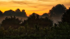 Morgendunst / morning mist 2 (Chridage) Tags: morningmist morgendunst sonnenaufgang sunrise morgengrauen morgenrot dunst bäume frühnebel