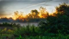 Morgendunst / morning mist (Chridage) Tags: morningmist morgendunst sonnenaufgang sunrise morgengrauen morgenrot dunst bäume frühnebel