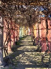 Pillars of pastel (ek1shots) Tags: avril