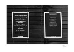 Outdoor Poems (radspix) Tags: minolta 7000i 3570mm af zoom f4 kentmere 100 pmk pyro