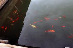 Confucius Temple of Quanzhou (_gem_) Tags: china travel vacation asia fujian quanzhou confuciustemple shrine temple confuciusshrine confucius 文廟 泉州 福建 fish pond