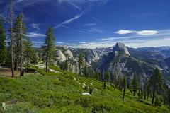 Yosemite Color on the Panorama Trail (RobertCross1 (off and on)) Tags: a7rii alpha ca california emount fe1635mmf4zaoss glacierpoint halfdome ilce7rm2 mariposa panoramatrailhike sierranevada sierras sony tenayacanyon yosemite yosemitenationalpark bluesky clouds forest fullframe hike hiking landscape mirrorless mountains nature trees