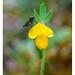 Flor Habitada