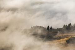Cypresses in the mist (Massimiliano Teodori) Tags: valdorcia sanquiricodorcia pienza torrenieri landscape tuscany italy fog haze mist dawn rising sun