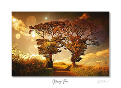 kissing trees (JCstudios PHOTOGRAPHY) Tags: kissing tree fife nature summer autumn green water stream burn maspie
