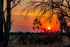 Sunrise in the semiarid land (FVillalpando) Tags: sunset semiaridland dry landscape ngysa sun light orange trees shadow nature red