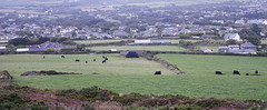 D22536.  From The Beacon. (Ron Fisher) Tags: thebeacon stagnes cornwall westcountry westofengland view england gb greatbritain uk unitedkingdom europe europa viewpoint evening cloud village field countryside cows